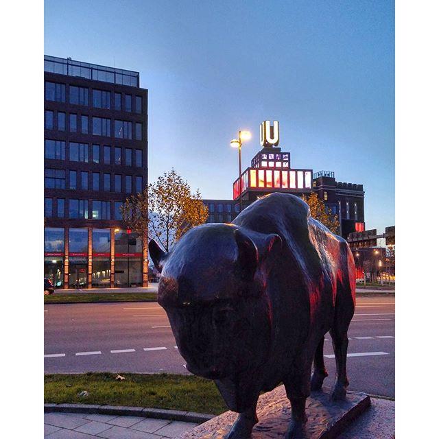 A #Buffalo from Buffalo II#dortmundüberrascht #dortmund